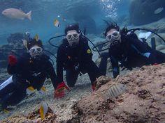 サンゴ礁で日本大好き! - http://www.natural-blue.net/blog/info_345.html