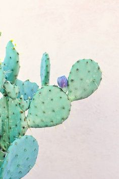 Cactus plants for inspiring my watercolour painting Image Cactus, Cactus Art, Cactus Decor, Art And Illustration, Toile Photo, Cactus E Suculentas, Cactus Plante, Illustration Botanique, Deco Floral