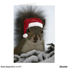 Christmas squirrel with Santa hat. Animals And Pets, Baby Animals, Funny Animals, Cute Animals, Christmas Squirrel, Christmas Animals, Merry Christmas, Father Christmas, Christmas Baby