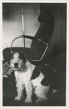 Family dog and chair, design of W.H. Gispen, Sonneveld House, Rotterdam, The Netherlands, 1930s.