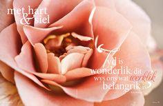 Sagte pienk rose/ Soft pink roses. Foto: Candice Askham www.leef.co.za