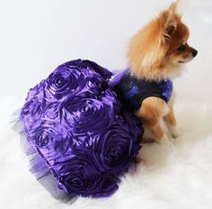 The Classy Dog is a luxury online dog boutique. Description from pinterest.com. I searched for this on bing.com/images