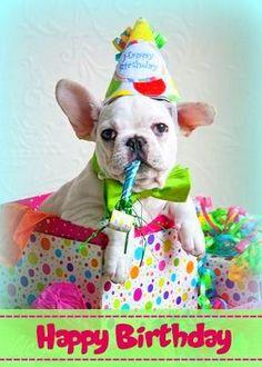 Cute Happy Birthday Dog Wishes Greetings Mini French