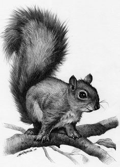Drawings Easy A squirrel drawing art inspiration. Please choose cruelty free vegan art supplies Pencil Drawings Of Animals, Animal Sketches, Drawing Sketches, Art Drawings, Sketch Art, Sketching, Realistic Drawings Of Animals, Drawing Animals, Awesome Drawings