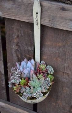 Ladle Spoon with Succulents