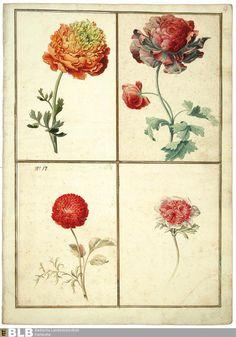 Titel Karlsruher Tulpenbuch - Karlsruhe 3302 Erschienen Karlsruhe, [ca. 1730]
