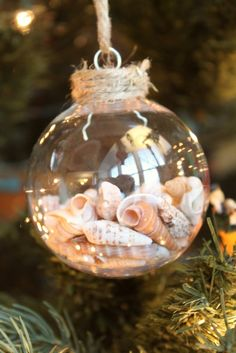 DIY Seashell Ornament: Collect shells and sand from coast, wash shells, fill ornament with shells and sand, mark year, hang on tree.