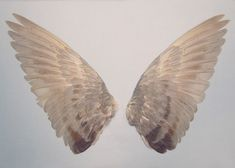 wings and angel image