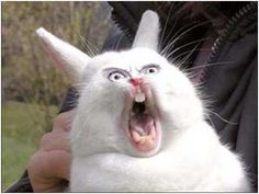 Freaky Easter Bunny Pictures | And yet, we still give these furry rats a whole weekend of praise. I ...
