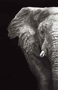 Elephant (Pencil) by Paul-Shanghai Image Elephant, Elephant Love, Elephant Art, African Elephant, Elephant Pictures, Elephants Photos, Elephant Photography, Animal Photography, Animal Paintings