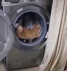 Cute Kittens, Funny Cute Cats, Cute Baby Cats, Cute Cat Gif, Funny Animal Jokes, Cute Little Animals, Funny Cat Videos, Cute Funny Animals, Funny Animal Pictures