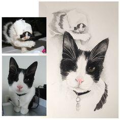 Weer een heel speciale tekenopdracht mogen maken. Dit katje is gered uit Griekenland en is gelukkig heel goed terechtgekomen. Deze tekening is een mooi aandenken aan de moeite die voor deze dieren gedaan wordt.