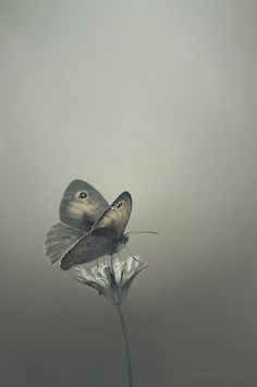 The colour of truth is grey ~ André Gide