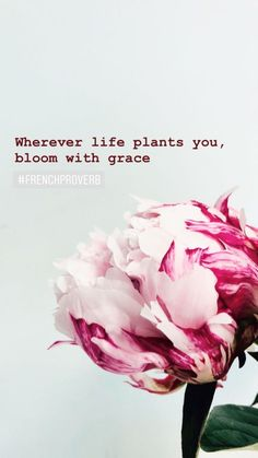 life plants you, bloom with grace Flower Quotes Inspirational, Floral Quotes, Rose Quotes, Words Of Wisdom Quotes, Bible Verses Quotes, Quotes About Flowers Blooming, Blossom Quotes, Feminine Quotes, Cross Stitch Quotes