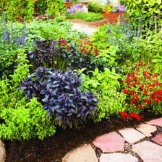 Like the interplay of color and texture in this edible border of herbs and fruit bushes