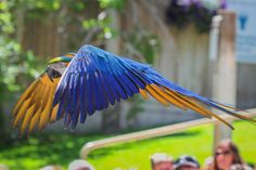 Macaw named Winston is 2nd from zoo bird show to fly away and die