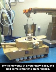 The last thing cats need are weapons like this considering how evil cats are now!