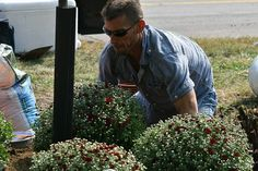 Tom helping plant mums