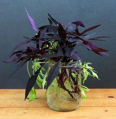 grow-indoor-plants-in-glass-bottles-apieceofrainbow (13)
