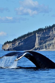 Discover these gentle giants of the sea Stuff To Do, Things To Do, Whale Watching Tours, Explorer, Blue Whale, Gentle Giant, Whales, Marines, Photos