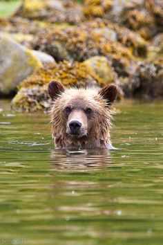 Grizzly Bear Safari in Alaska - The Great Bear Stakeout Part 1