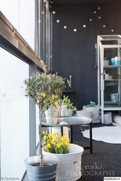 """Iloisen väriset narsissit tuovat väriä käyttäjän """"Keskipiste"""" parvekkeelle. #styleroom #inspiroivakoti #parveke Small Patio, Table Decorations, Inspiration, Outdoors, Interiors, Album, Furniture, Garden, Home Decor"""