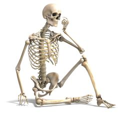 An Introduction to the Skeletal System: Bones and Cartilages