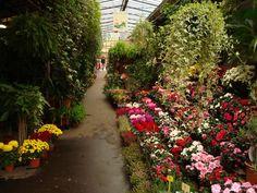 Marché aux fleurs à Rocroi le 13 mai prochain sur la place.