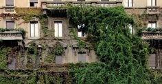 2014 11 10-autunno-milano-foliage-viale-majno-A.jpg