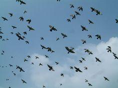 birds fly overhead