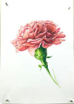 #명덕창아 #카네이션 Carnation Flower Tattoo, Flower Tattoos, Pencil Drawings Of Flowers, Art Drawings, Watercolor And Ink, Watercolor Flowers, Month Flowers, Carnations, Botanical Illustration
