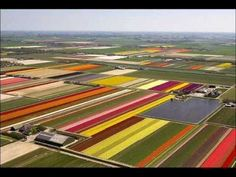 Tulips   At first glance, it looks like a giant child armed with a box of crayons has been set loose upon the landscape. Vivid stripes of purple, yellow, red, pink, orange and green make up A glorious patchwork. Yet far from being a child's sketchbook, this is, in fact, the northern Netherlands in the middle of tulip season. The Dutch landscape ...