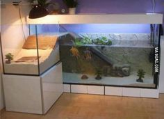 When turtles have a better apartment than you do...
