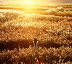 ... watching the sunset in a wheat field ...