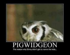 "Ahaha. I always wondered. ""Pigwidgeon- The reason why Ginny didn't get to name the kids..."""