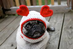 Be ours! #pug #cuteness