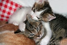 Two cute kittens lying on back of parent.