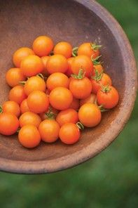 Hope springs eternal for a wonderful tomato season. A great article to help me plan and plot.