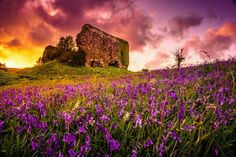 Bluebells at Aros Castle Ruins by Kellett Scotland Castles, Scottish Castles, Castle Ruins, Cool Landscapes, Beautiful Sky, Abandoned Places, Faeries, Pretty Pictures, Monument Valley