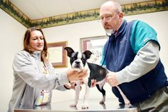 Bullard Veterinary Medical Center recognized for excellence in pet care through fifth consecutive Locals Love Us award  Bullard Veterinary Medical Center owner and veterinarian John Alexander, along with Crystal Hellmann, Bullard Veterinary Medical Center's Clinics and Surgery Director, perform a routine check-up on Beltre, a Boston Terrier.