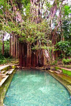 tropical sweetness