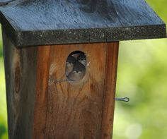 Babies the day they fledged. ~Carla