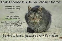 Be kind to feral cats Animals And Pets, Funny Animals, Cute Animals, Brave Animals, Cat Quotes, Animal Quotes, Animal Pics, Crazy Cat Lady, Crazy Cats