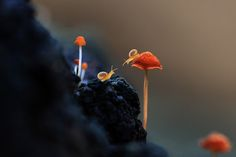500px ISO » Unbelievable Photography » Best of 2014: Top 10 Macro Photos