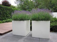 Lavendel - idee