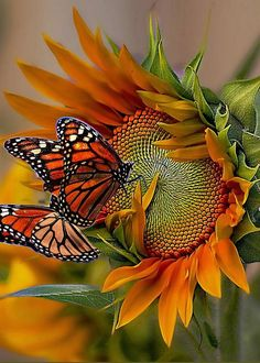 Monarchs And Sunflower Greeting Card for Sale by John Kolenberg Beautiful Bugs, Amazing Nature, Beautiful Gardens, Beautiful Flowers, Butterfly Painting, Oil Painting Flowers, Light Painting, Sunflower Arrangements, Hummingbird Garden