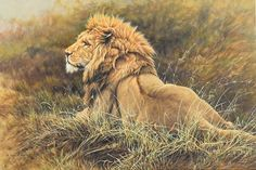 Latest Original Wildlife Paintings for Sale New Exclusive Original Animal Paintings by Alan M Hunt, Join Alan's Mailing list to be notified of his newest wildlife artwork for sale. Wildlife Paintings, Wildlife Art, Animal Paintings, Animal Drawings, Art Drawings, Animal Painter, Sand Cat, Lion Wall Art, Lion Painting