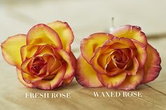 fresh rose - You can make your beautiful fresh-cut roses last longer than you ever imagined by dipping the open blooms in melted wax! Wax Flowers, Fresh Flowers, Dried Flowers, Wedding Flowers, Wedding Bouquets, Beautiful Flowers, How To Preserve Flowers, Preserving Flowers, Baby Succulents