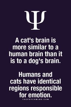 Thats why cats are such assholes their brains are similar to humans