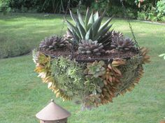 "I line the hanging basket with 1/4"" wire mesh, and pack it very tightly with cactus mix.         Then, flip the basket upside-down onto plyw..."